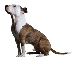 Ohio lifts designation of pit bulls as vicious