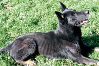 Former Watsonville officer charged with neglecting his K-9 partner - San Jose Mercury News