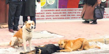 Animals rights activists in Turkey hope to see acts of animal cruelty reclassified from misdemeanors, punishable with a mere fine, to imprisonable offences later this year.(PHOTO aa, Emrah Yaşar)