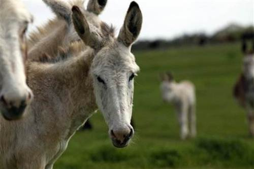 Hundreds of donkeys abandoned in drought - Weather - msnbc.com