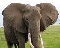 one-elephant-200x160