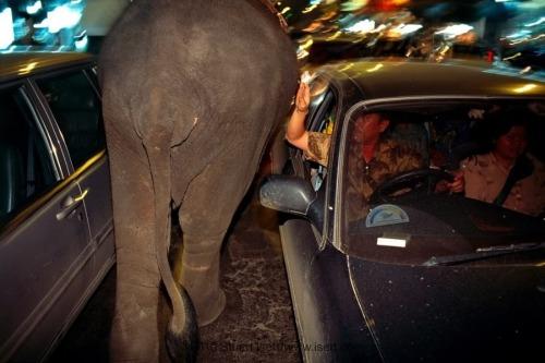 elephant-beggars-02