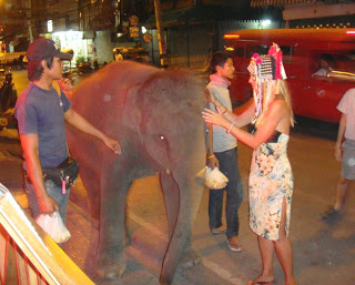 Elephants on the streets of Chiang Mai are becoming a sad yet familiar site.