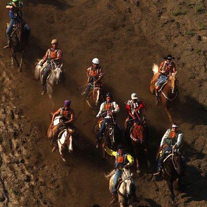 horses suicide race