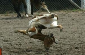 Rodeo broken neck