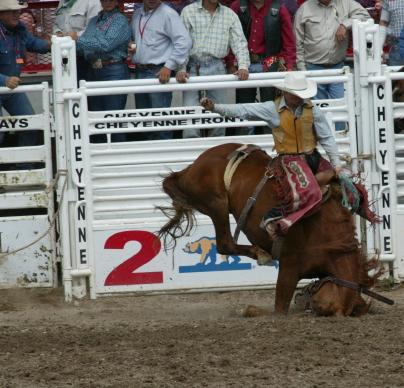 rodeo-horse-slammed-sm