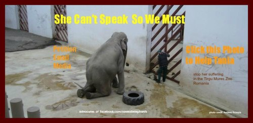 Animal Abuse Elephants Stop Animal Abuse