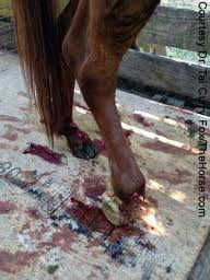 benefits of horse slaughter