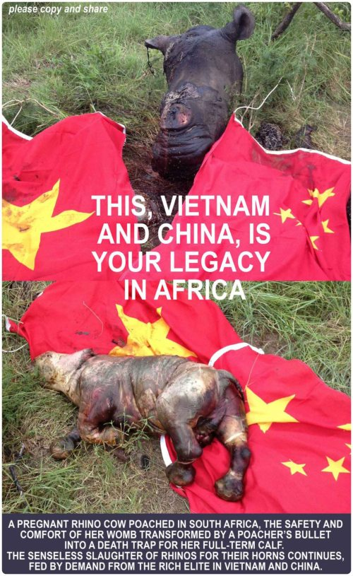 Rhino legacy Vietnam China dead baby