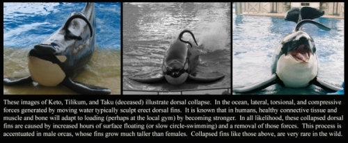 killer whale5