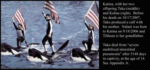 killer whale6