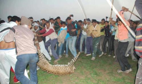 Villagers kill leopard in India