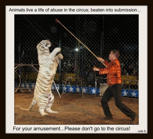 Don't Support Circus Cruelty
