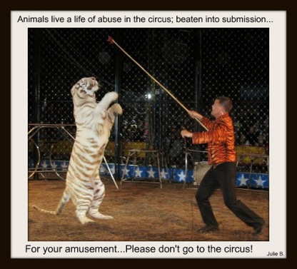 No Animal Should Be Used and Abused For Entertainment